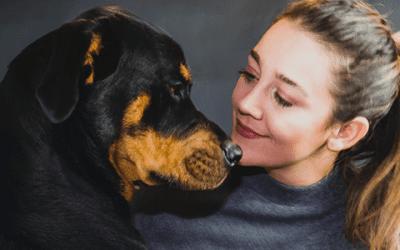 Is een Rottweiler gevaarlijk?